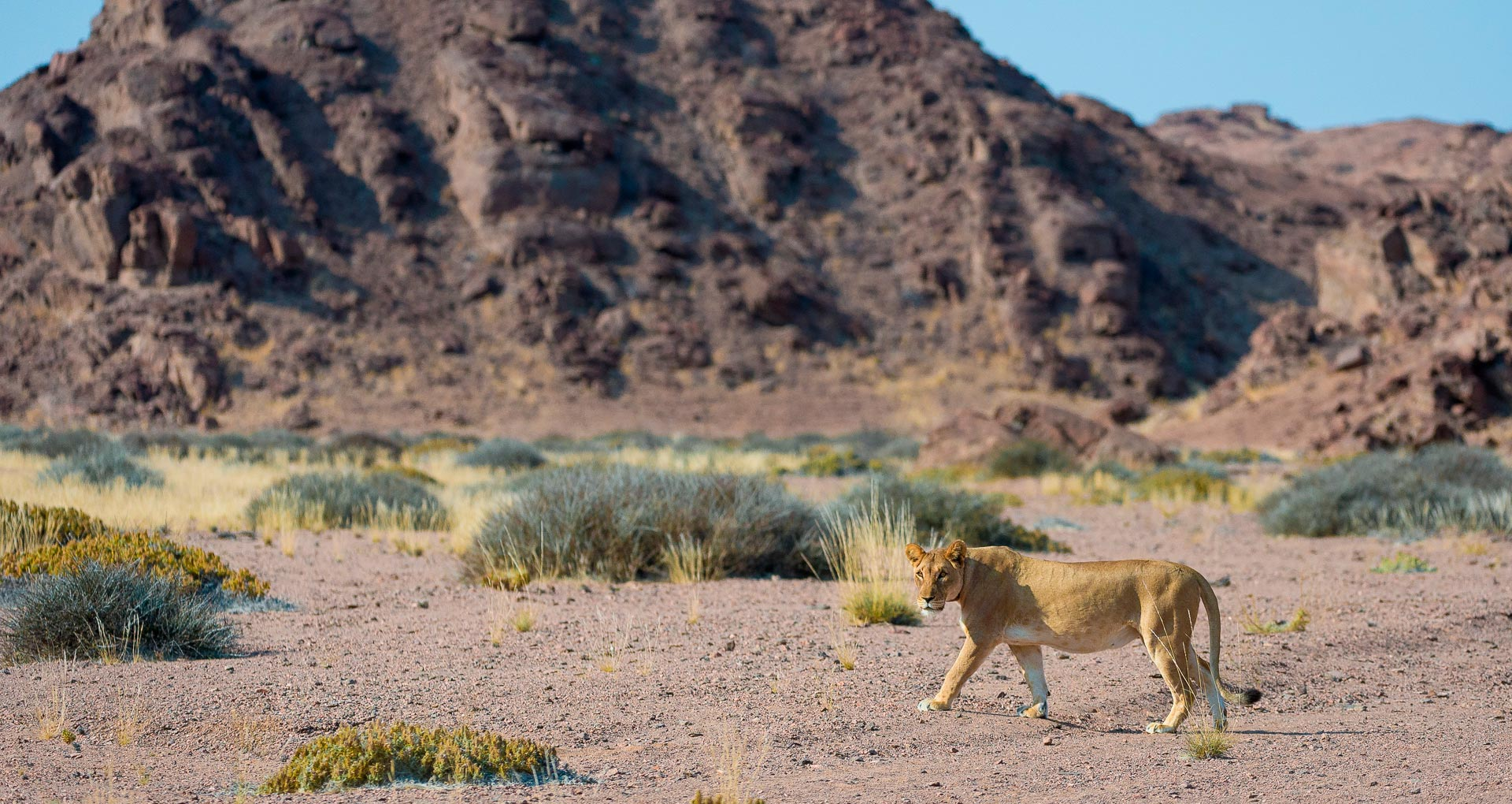 Highlights from Namibia
