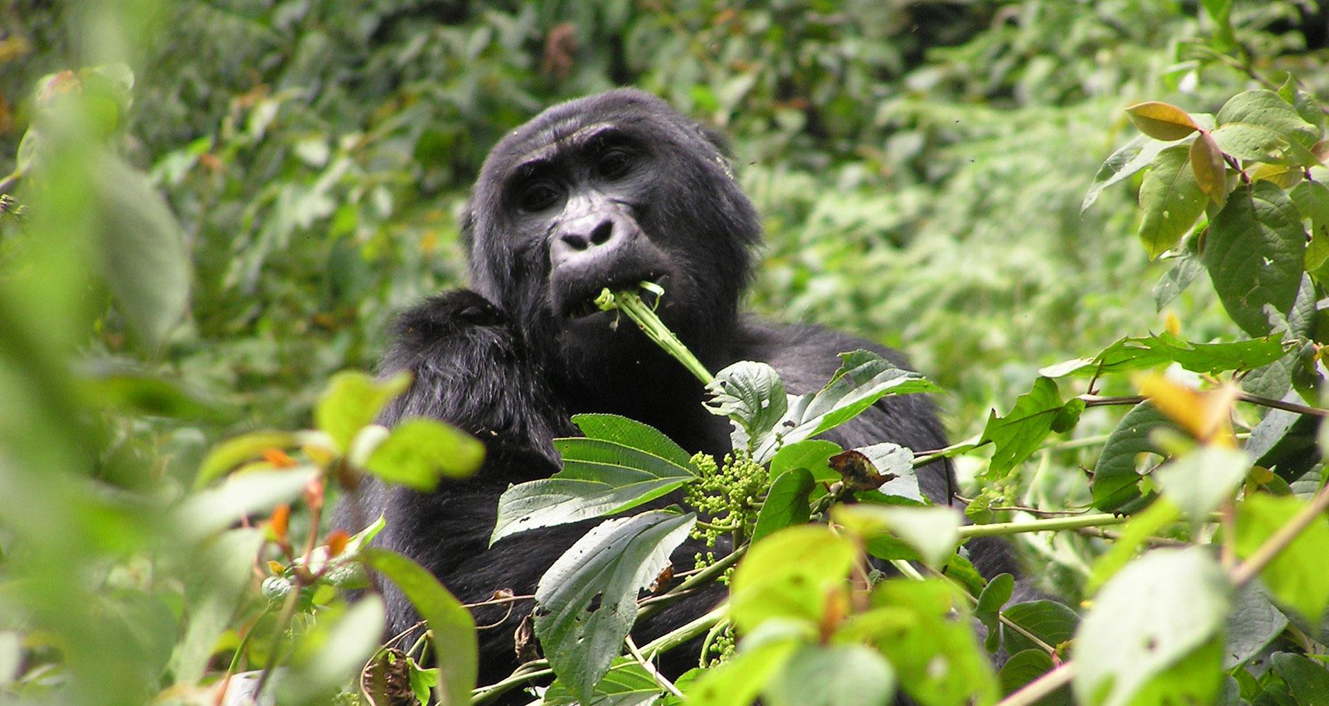 Highlights from Uganda