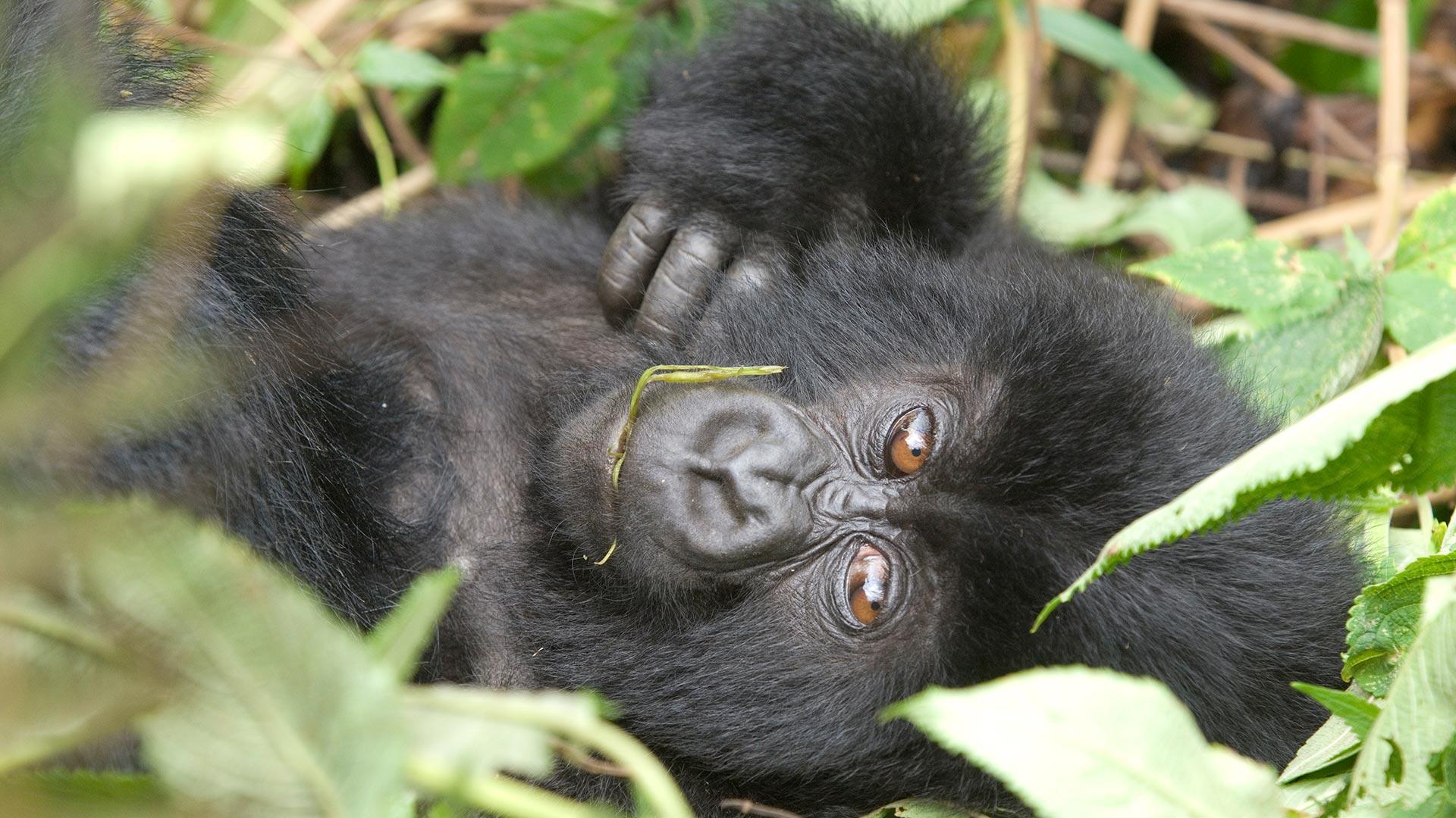 Highlights from Rwanda